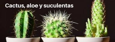 Cactus, Aloe, Suculentas y Semillas