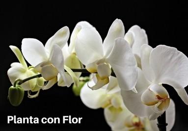 Planta con Flor